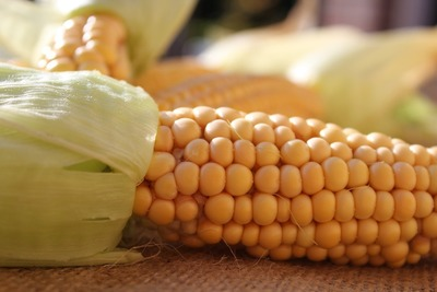 Medium farm corn(1000)