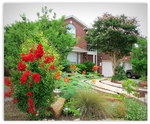 Betty Saenz re-designed her yard to minimize lawn space.