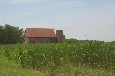 Medium farm