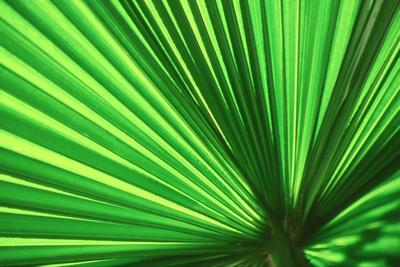 Mexican palm and dwarf palmetto palm are both Texas natives.