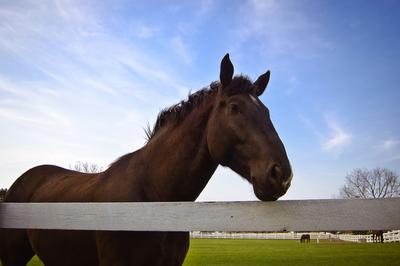 Medium horse at fence 1344364 639x424