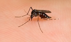DuPage County creates index to protect against West Nile Virus.