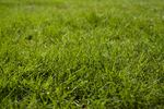 Get rid of the weeds in your lawn so it looks lush and gorgeous, with solarization