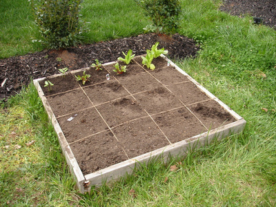 Square-foot gardening is the practice of dividing the growing area into small square sections.