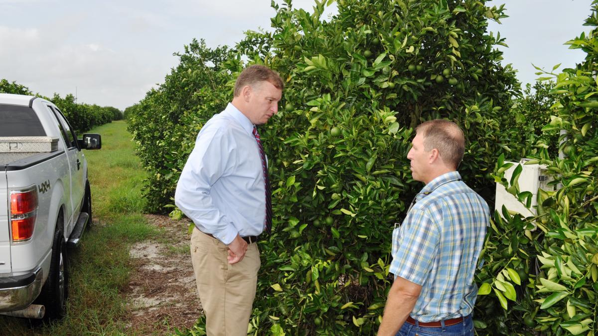Florida receives funding for citrus research, protection.