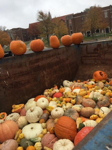 Large pumpkinpurge2