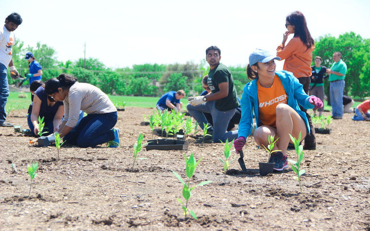 Students planting milkweed on campus to create butterfly habitat
