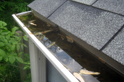 Allowing rain gutters to become clogged can result in expensive damage to the home.