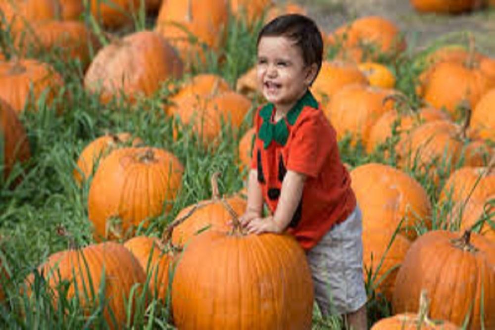 Pumpkinfestvl