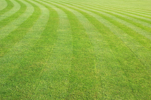 The City of Troy has requested bids for the 2016 grass-cutting season.