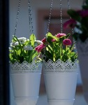 Hanging planters are great to refresh a space, especially if you're tight on space on your patio.