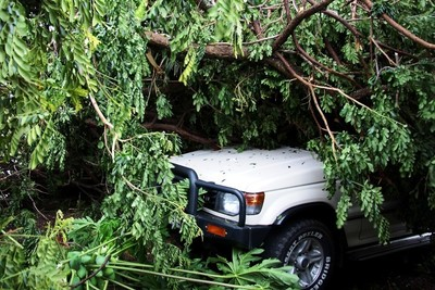 Treat toppled and damaged trees with caution.