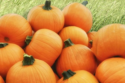 Plant pumpkins now so you'll have something for pie or fall decor in 90 to 120 days.