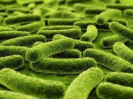 Antiangiogenesis drugs advance tuberculosis treatment