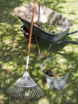 Yard trimmings picked up by the city include grass clippings, leaves and small branches that are no longer than 5 feet and no thicker than 3 inches in diameter.
