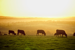 The cattle industry leaves its mark on the environment.