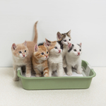 Kitties are adorable, but the process for manufacturing cat litter can be very harmful to the environment. There are, however, safe alternatives.
