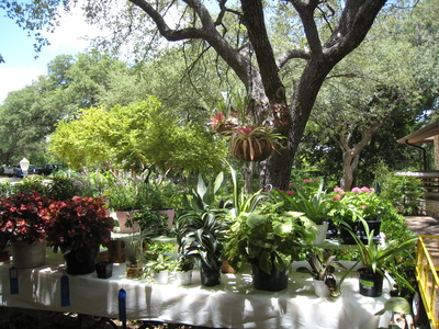 Zilker Botanical Gardens provides a diverse and stunning selection of greenery.