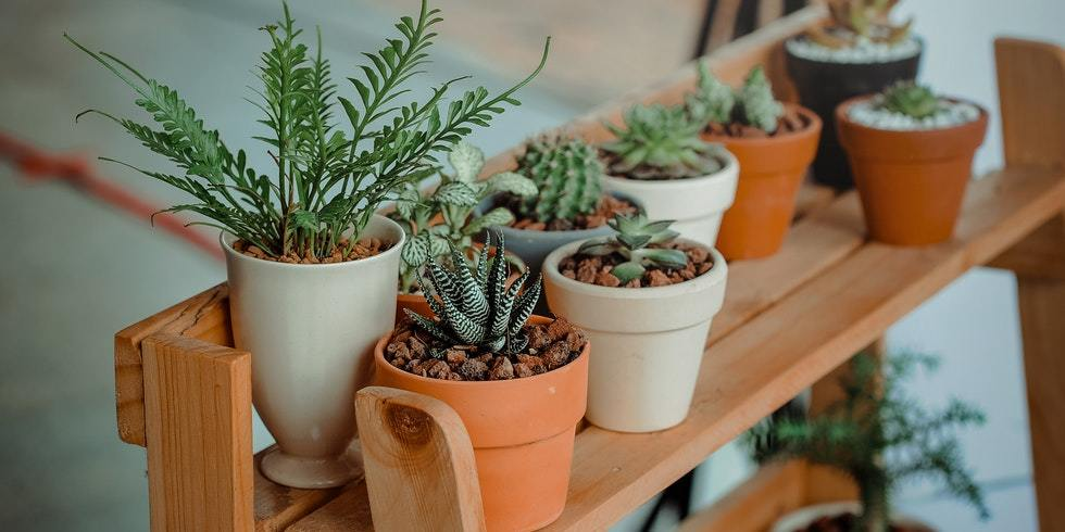 If you are new to plants and gardening, it can be a challenge to get started.