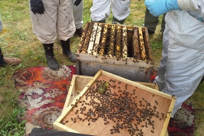 Be sure to invest in proper gear when launching beekeeping endeavor.