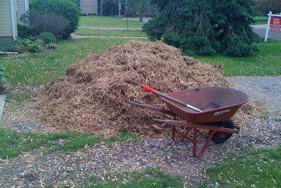One of the advantages of cedar mulch is that it is a natural insect repellent.