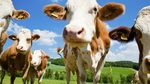 How satellites and insurance are securing livestock in East Africa