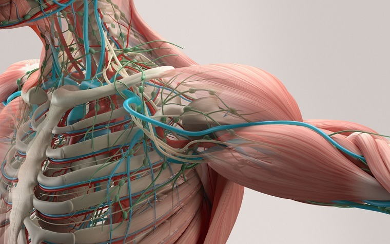 These actuating fibers are called 'artificial muscles' because they mimic the fiber-like form-factor of natural muscles.