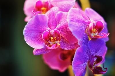 There will be a wide variety of orchids for sale at the