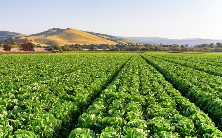 """Alexander Blum's paper, """"Rational Misconception: Agricultural Biotechnology,"""" discusses how crucial well-informed conversations for stakeholders are when it comes to understanding agricultural technologies."""