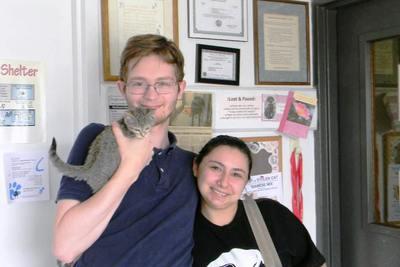Medium kankakee kitten adoption