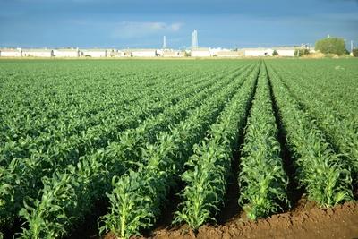 Medium farm 1000x667