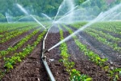 Medium irrigation