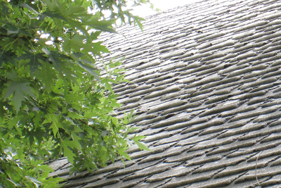 Roofing shingles in shady, high-humidity conditions can fall prey to moss, fungi and other organisms.