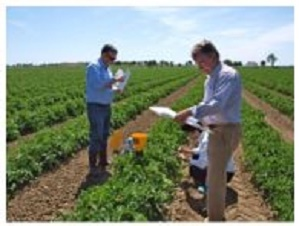 NEC observes tomatoes in Portugal