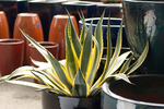 Outdoor planters can go far in creating a modern aesthetic for a home.