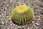 Cactus are available in a wide range of sizes and shapes.