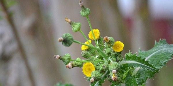 Large weeds  5647114118