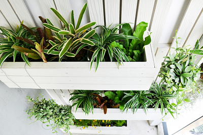 White planters on wall