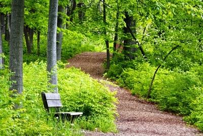 Medium shutterstock forest trail