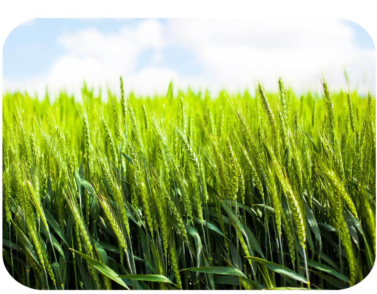 EPA grants registration to Vive Crop Protection fungicide product ...