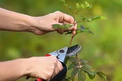 Medium pruning