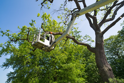 Medium treetrimming