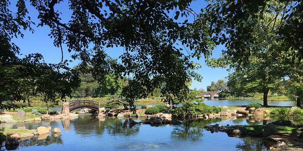Large jacksonpark koipond