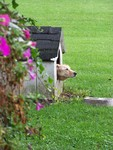 A doghouse is a good start to create a dog-friendly yard.