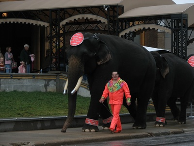 The Shrine Circus may not happen this year in the City of Pittsburgh