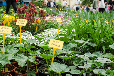 Funds from the Sunshine Community Gardens plant sale will benefit the Texas School for the Blind and Visually Impaired.