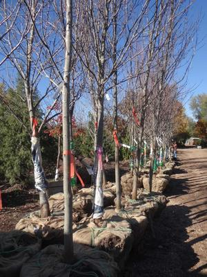 One of the important things to consider when picking a tree at a nursery is whether it will need full sun or shade.
