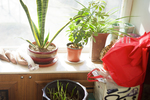 House plants not only add life to a room, they can also add health to the air.