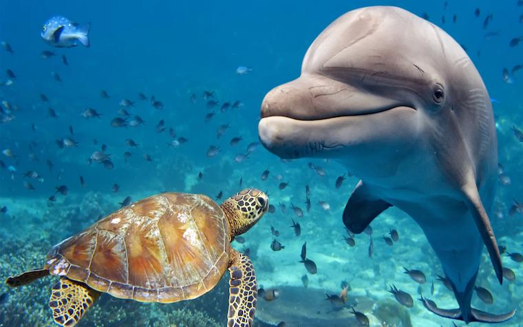 SeaWorld Abu Dhabi to open on Yas Island