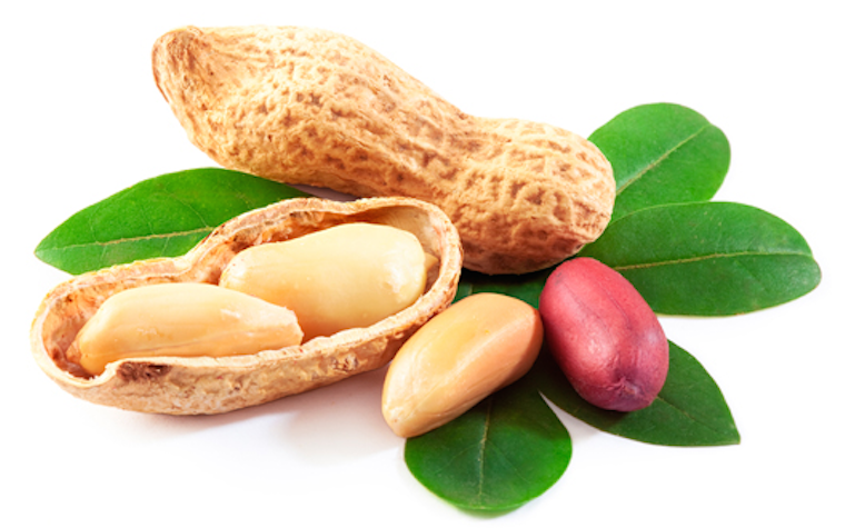Aimmune launching European study of peanut allergy treatment